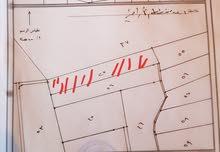 جرش - مثلث المشيرفة - قفقفة - ارض زراعي (زيتون)