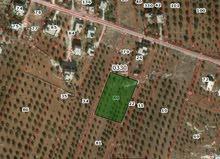 3417 متر قطعة مزروعه زيتون سكنيه في كفر سوم