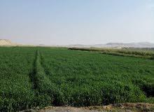 قطعتين أرض زراعية الاولى 200م والثانية 225م