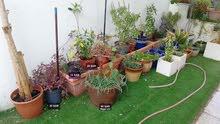 الأواني النباتية
