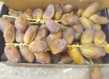 بيع التمور بالجملة في موريتانيا بمناسبة قدوم شهر رمضان الكريم