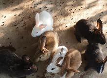 ارانب عمر شهر وشهرين