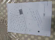 10 دونمات زراعي على شارعين في المشنشل _ المفرق / قرب مزرعة سمو الأميرة عالية ...