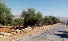 ارض في محافظة جرش/ بجانب منتزه دبين