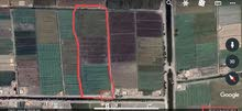أرض زراعية مساحة 6 فدان ونصف بلطيم-كفر الشيخ