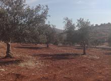 مزرعة للبيع في منطقة دحل