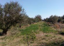 اراضي ومزارع للبيع