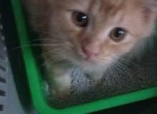 قطط صغار ذكر و انثى بيع مستعجل