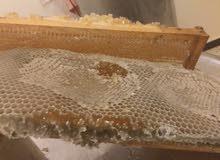 عسل ربيعى صافى