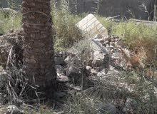 قطعة ارض زراعي اقرار من المحكمة مساحة 100م مربع في كربلاء المقدسة منطقة الحر الص