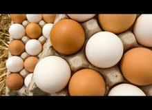 مطلوب بيض ملقح دجاج أو سمان أو رومى أو بط أو نعام