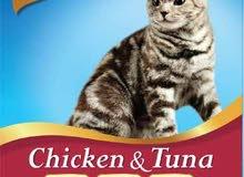 يتوفر اكل قطط تايلندي