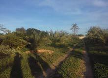 مزرعة مساحتها هكتارين بوادي الربيع طريق القوارب خلف الجامع الاخضر