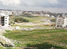 شفا بدران بالقرب من مدارس اليوبيل