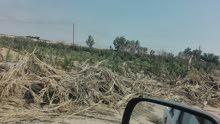 مزرعة للبيع 50 دونم على طريق عام