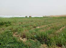 20فدان للاستثمارالزراعي وللمشاريع كامله المرافق