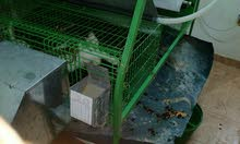 بيع ارانب (سلالات ولحم) وبطاريات ارانب