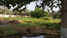 مزرعة قائمه للبيع وادي االوامي
