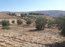 ارض للبيع في جرش فوق مشتل فيصل الزراعي قبل مدينة جرش