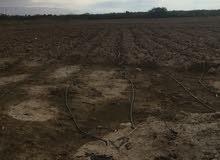 وحدة ارض زراعية للبيع