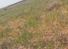 أرض زراعية في برية مصراتة - اسيوطة