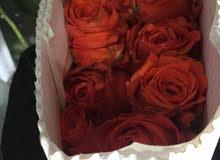 بيع الورد الطبيعي بالجملة
