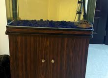 Fish with Fish Aquarium
