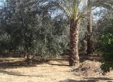 ارض 570 متر طابو بدير البلح شرق طريق صلاح الدين