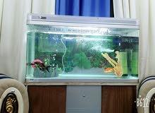 حوض سمك بحاله جيده جدا للبيع