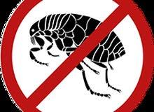 مكافحة حشرات وفئران وجرذان