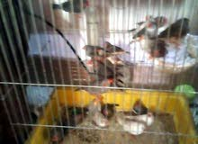 مطلوووووووب ممول لمشروع طيور الزينة و لباقي التفاصيل الاتصال على الرقم