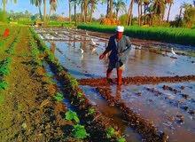 ارضي زراعة للبيع
