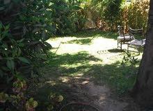 منزل أرضى قديم به سايفون ومساحتها 300 متر شمال مستشفى أحمد قاسم