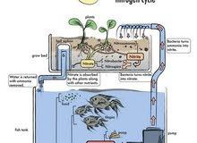 انشاء انظمة اﻻستزراع السمكي