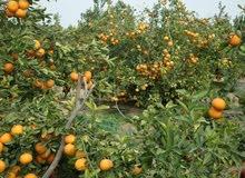 مزرعة للبيع بالمنوفية