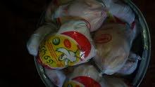 دجاجتين وجدريت تمن