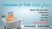 حمام قطط