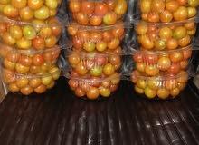 طماطم شيري وكرزي عضوي
