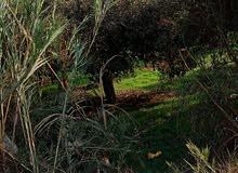 ارض زراعيه حوالي 12 قراط في القلايله قصاد الخلوه جنب المباني