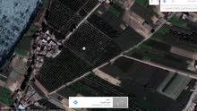 أرض زراعية بمصر للبيع الموقع: محافظة القليوبية- مركز بنها