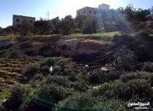 أرض مميزة مقابل بلدية حسبان