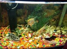 للبيع حوض سمك كبير