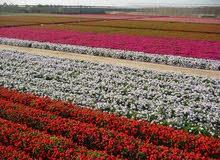 تصميم حدائق وتوريد نباتات وزراعتها وصيانتها