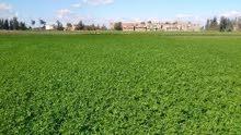ارض زراعية علي طريق الإسكندرية للجاديين فقط ولسرعه البيع
