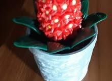 hada bado wared ceramique la valontaine