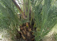 For sale at a very good price Natural and Artificial Plants