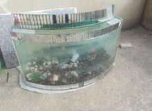حوض سمك للبدل على كنار او للبيع