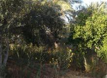 ارض 1800 متر طابو على شارعين بدير البلح