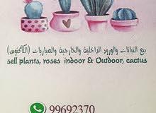 الدخان الأبيض لبيع النباتات الداخليه والخارجيه والصباريات