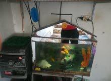 حوض سمك للبدل ع عصافير